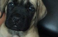 steph-dog